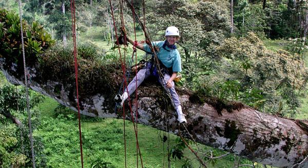 Climber on big limb.web.pg1