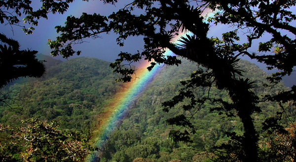 Cloudforest rainbow.web.pg1
