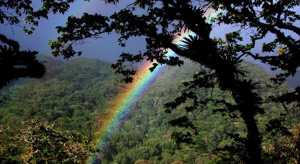 Cloudforest rainbow.web.pg1