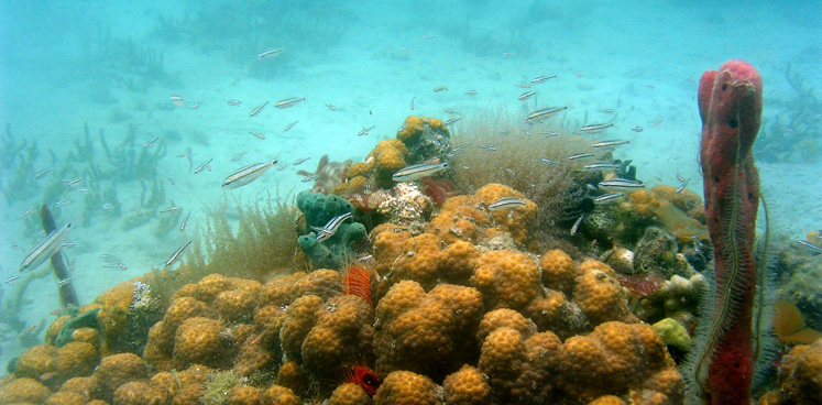 Coral head and reef fish.web.pg1