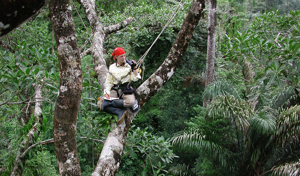 ITEC student in tree.web,pg1