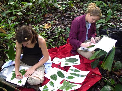 Plant biodiversity project.web