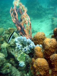 Reef diversity.web