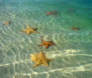 2. Cushion Sea Stars, Common in Shallow Water
