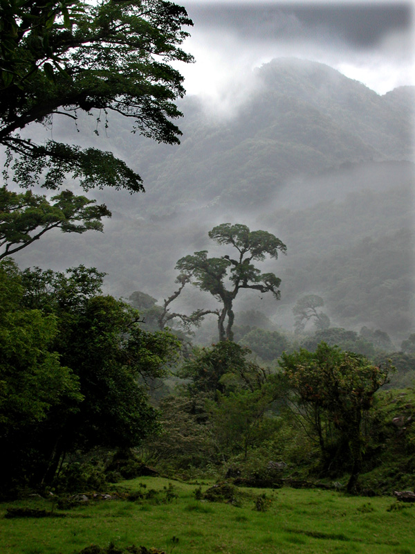 Cloudforest view.web