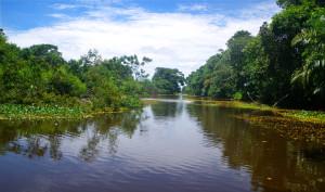 Sporopta Canal.web