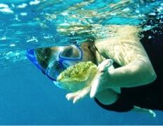 upsidedown-jellyfish