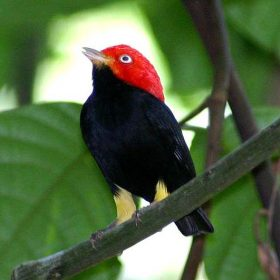 Conservation & Birding Programs